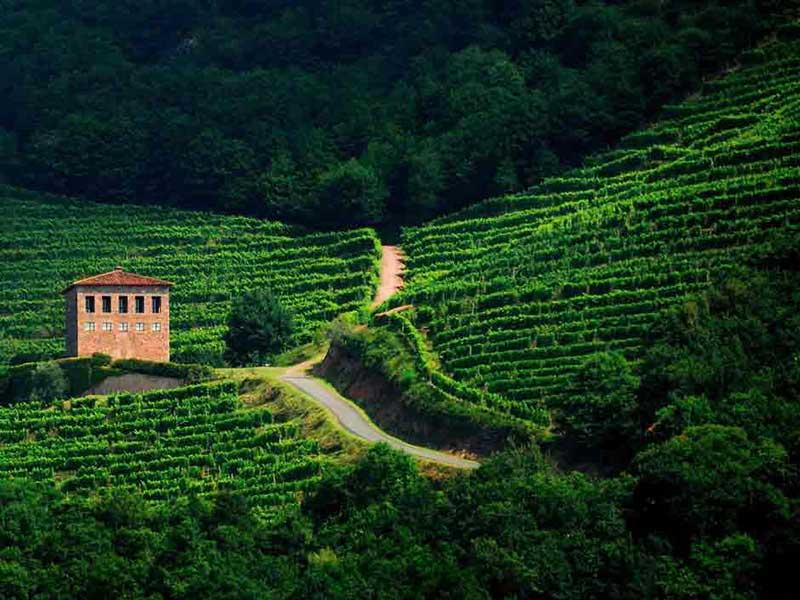 1.ST JEAN PIED DE PORT- IROULÉGUY WINE REGION
