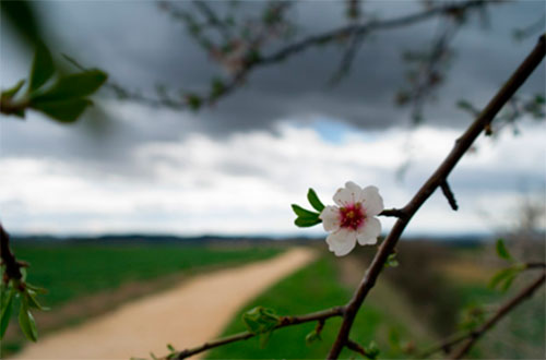 flower-camino-1
