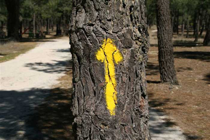 your-first-camino-de-santiago-yelow-arrow