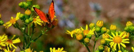 saint-james-4-flower