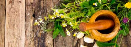 five-medicine-herbs-on-the-camino-cover