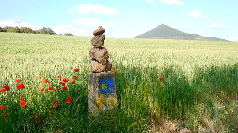 wild-herbs-Camino-de-Santiago-004