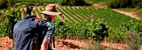 Wine-on-Camino-Francés-cAÑÓN-DEL-sIL